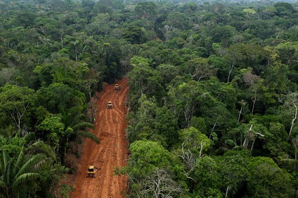 Amazon carretera selva tropical para la explotación de petróleo