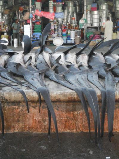 Colas de tiburón azotador en Dubai