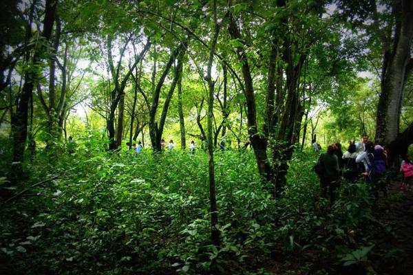 The students explore monkey habitat during Monkey Week. Photo courtesy of Juan Carlos Serio Silva.