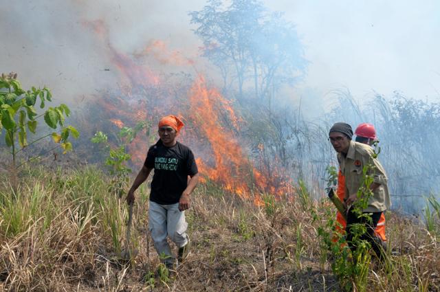 Kebakaran di konsesi PT RHM. Foto: Walhi