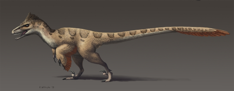Utahraptor Life reconstruction.