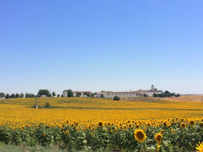 アラアル〜ウトレラのA-394のひまわり畑