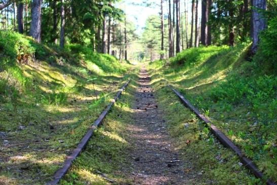 Raudtee keset Naissaare loodust
