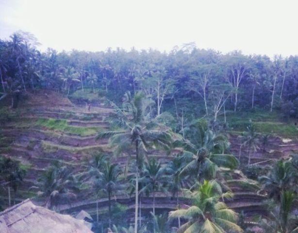 Sore yang Redup di Tegalalang Rice Terace