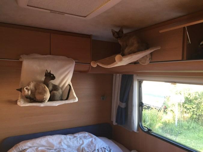Katthängmattor i husvagn.