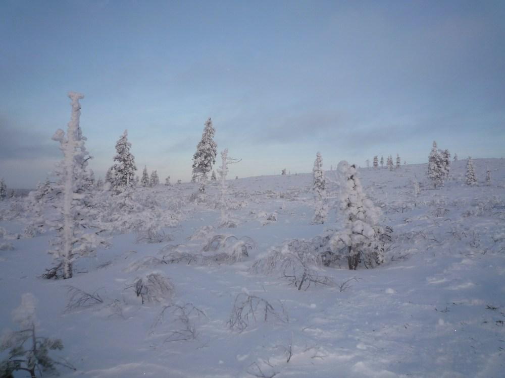 Arctic Magic (3/6)