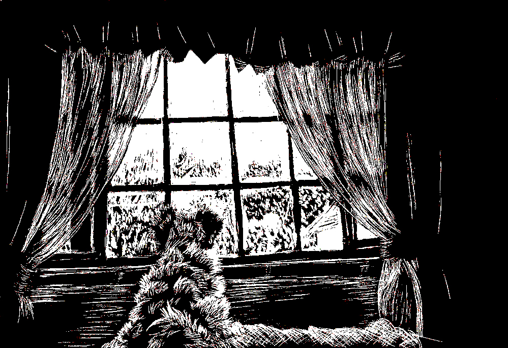 scratchboard Cinnamon Window portrait