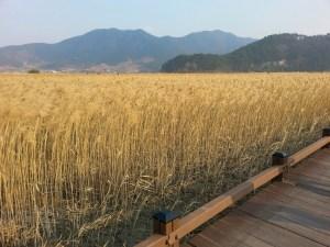 Sociology blog introduction Suncheonman Korea