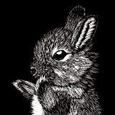 Baby Toki Rabbit
