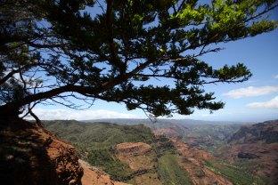 The view from a lookout point in Waimea Canyon in Kauai.