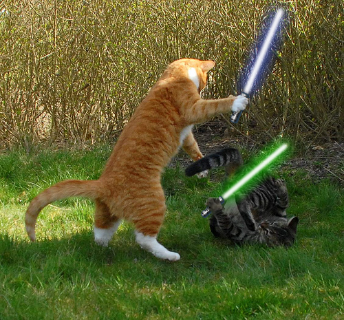 jedi-kitties