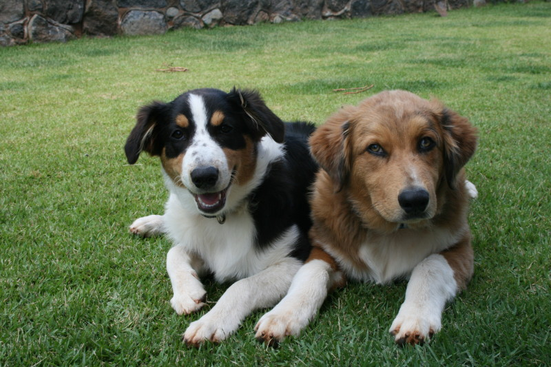 Oscar and Lulu at thegrommom