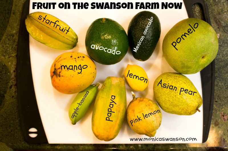 fruit on thefarm
