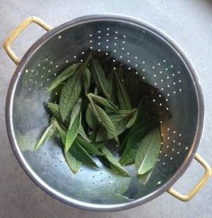 Comfrey Leaf Fritters