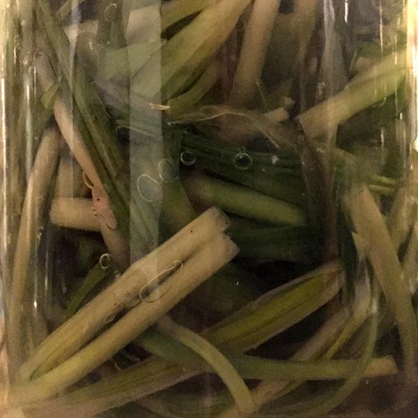 Fermenting wild garlic
