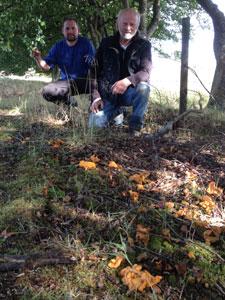 mushroom-forage-225x300px