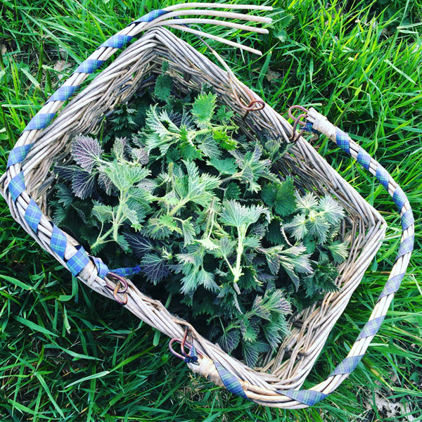 Basket of nettle