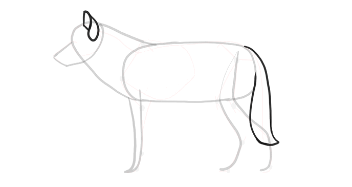 how-to-draw-wolves-drawing-process-5