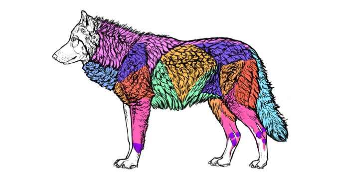 how-to-draw-wolves-fur-areas