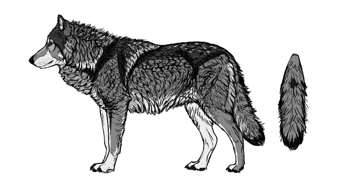 how-to-draw-wolves-fur-colors