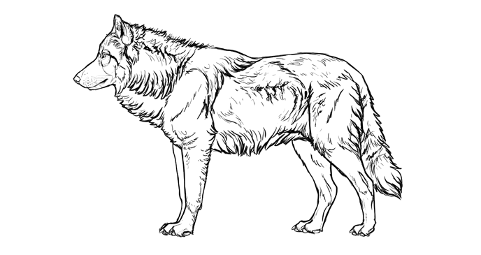how-to-draw-wolves-fur-simplified