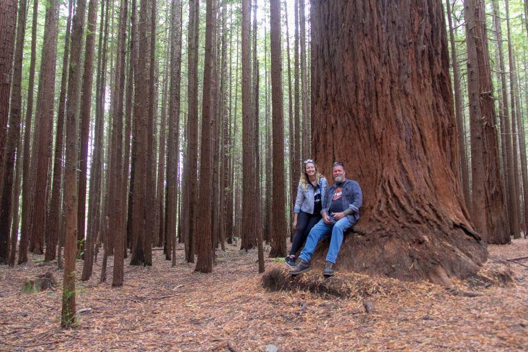 Rotorua Redwoods 9