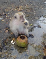 Thailand Monkey 2