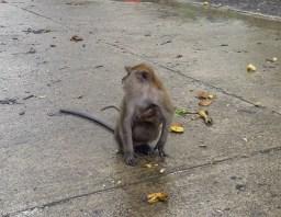 Thailand Monkey 3