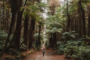 7 New Zealand Activities 3