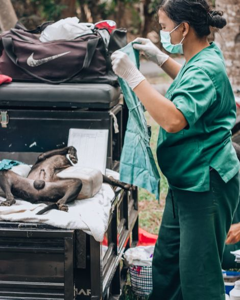 Paws of Lembongan Nusa Ceningan Vet Dog Desex
