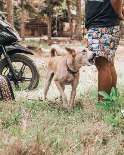 Paws of Lembongan Nusa Ceningan Dog Barking