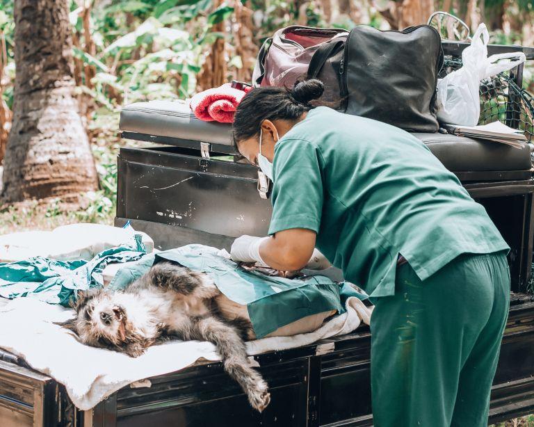 Paws of Lembongan Vet Dog Desex Nusa Ceningan
