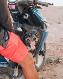 Paws of Lembongan Nusa Ceningan Dog