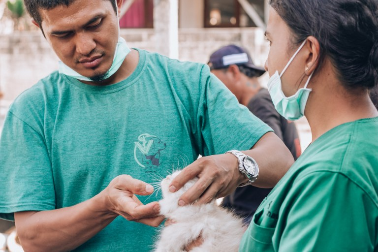 Paws of Lembongan Nusa Ceningan Vet Cat