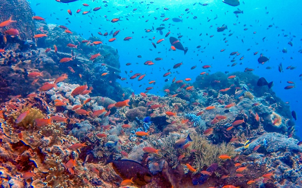 Marine Wildlife Blue Corner Dive Nusa Lembongan Bali