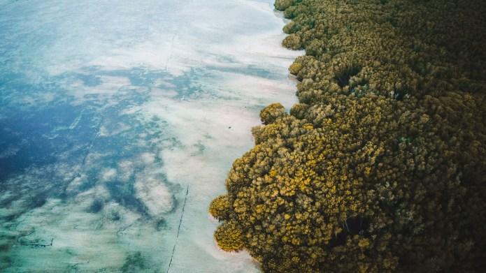 Mangroves Nusa Lembongan Bali Indonesia