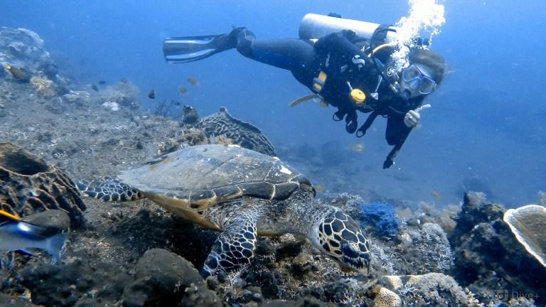 Kubu Shipwreck Tulamben Bali Indonesia 4