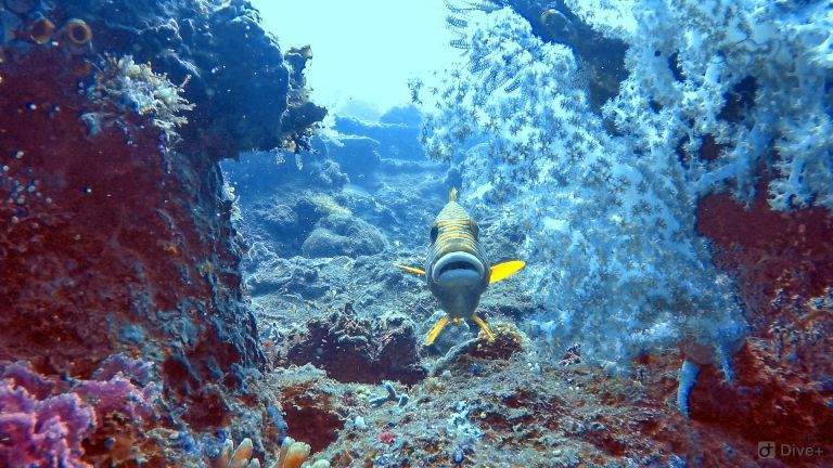 US Liberty Shipwreck Tulamben Bali Indonesia 1