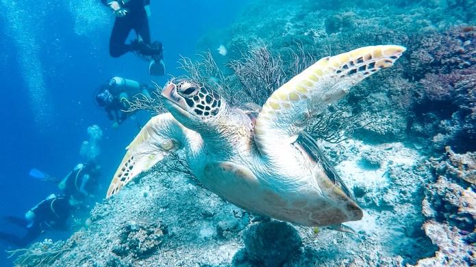 Moalboal Scuba Diving Turtle Cebu Philippines
