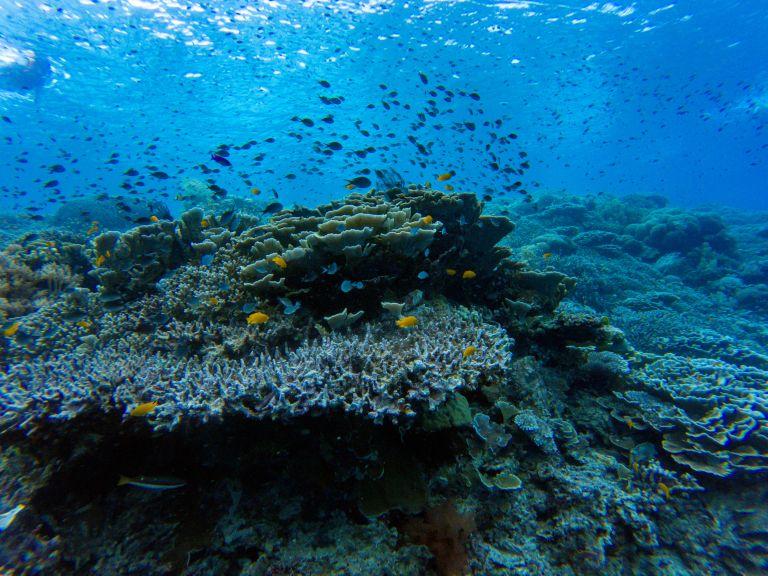 Scuba Diving Balicasag Island Bohol Philippines