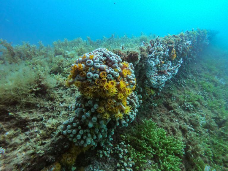 Ilha Grande Rio de Janeiro Brazil Scuba Diving