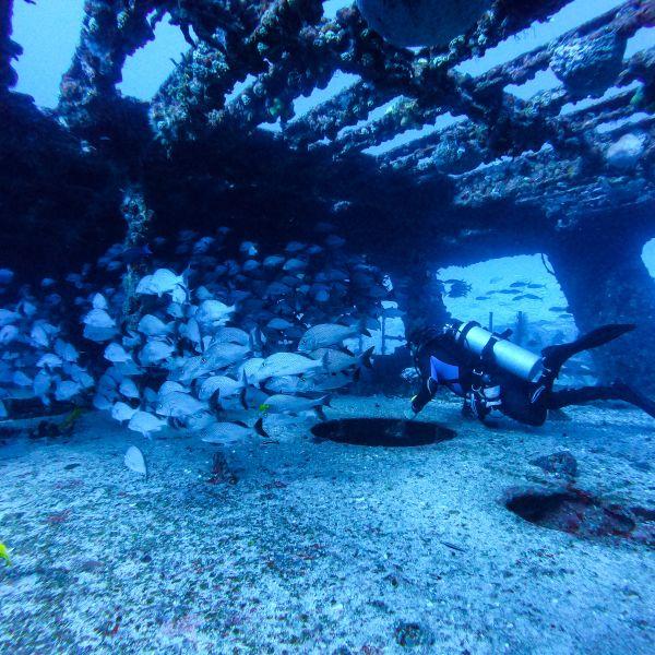 Shipwreck Scuba Diving Cancun Mexico North America