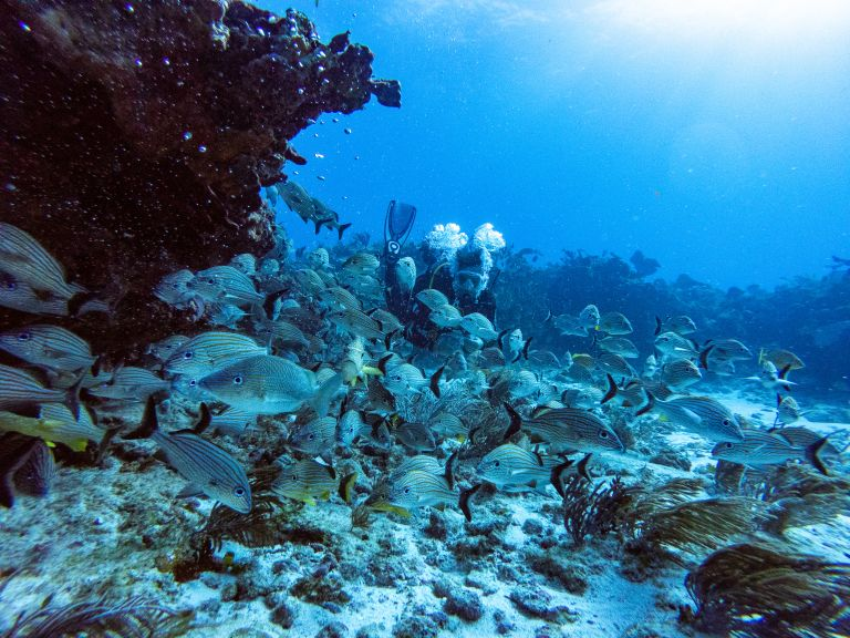 Man Scuba Diving with Schooling Fish Cancun Mexico