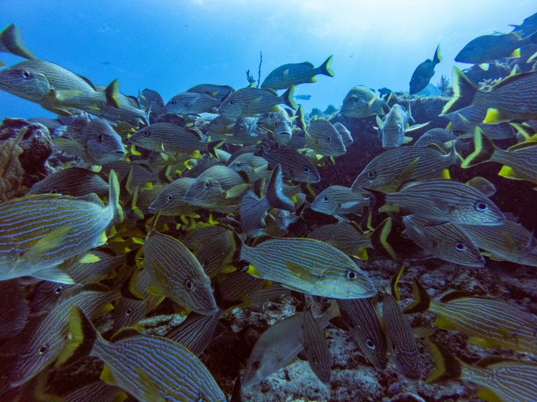 Scuba Diving with Schooling Fish Cancun Mexico