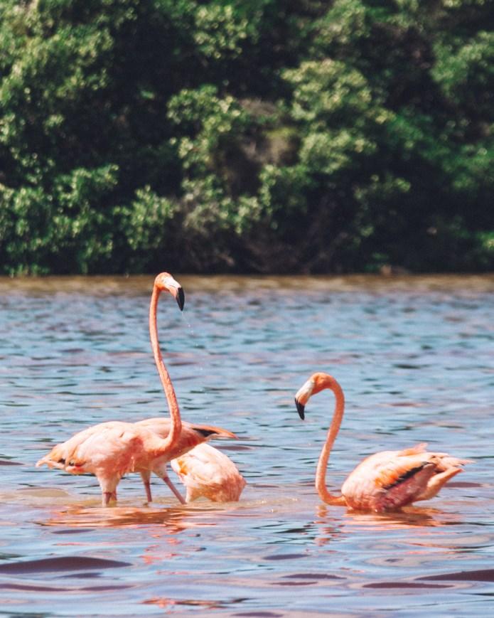Celestun Flamingo Merida Mexico North America