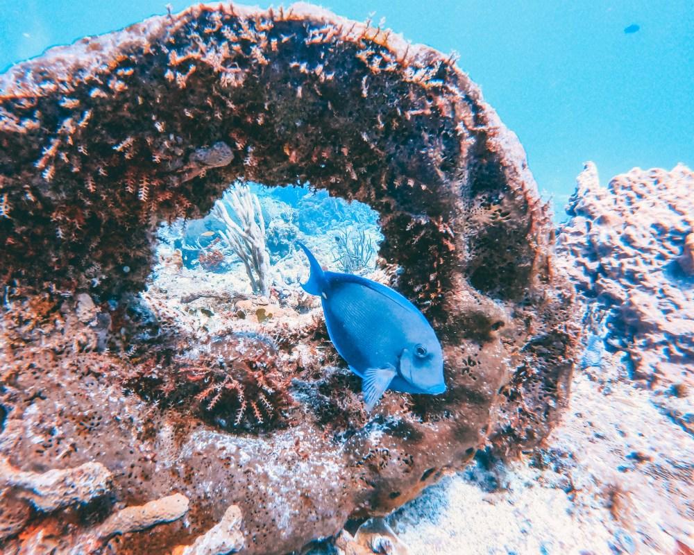 Scuba Dive PADI Playa del Carmen Cozumel Mexico North America