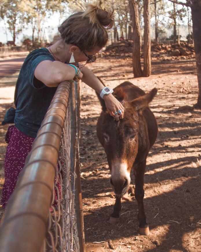 Mt Uncle Distillery Donkey Atherton Tablelands Queensland Australia