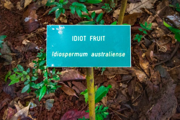 Daintree Rainforest Discovery Centre Learning Queensland Australia