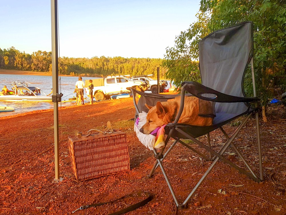 Sleepy Dog at Waroona Dam Western Australia