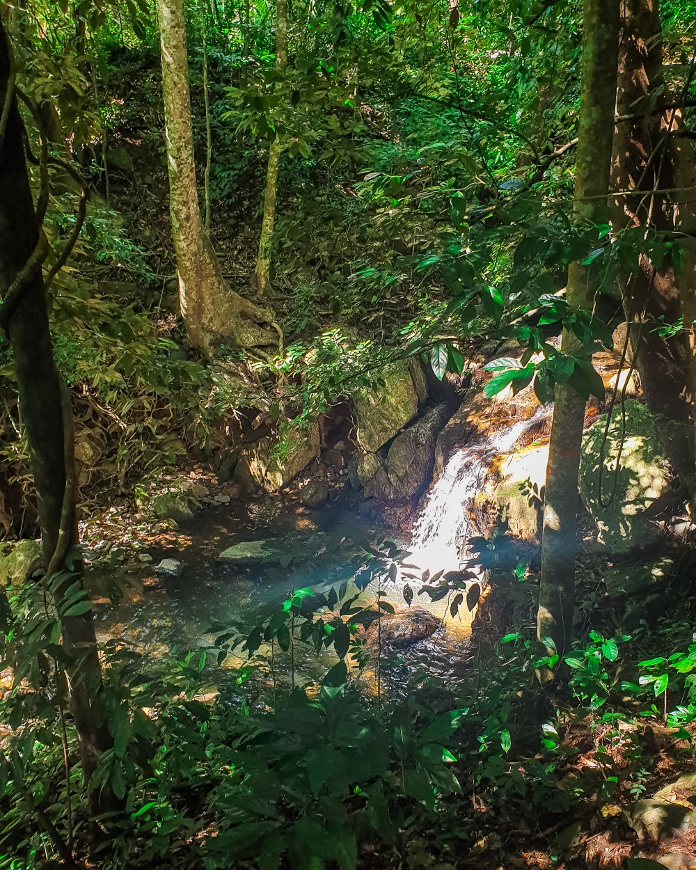 Smiths Trailhead Cairns Queensland Australia